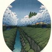 川瀬巴水H80「小金井の夜桜」(後摺木版画)摺り上がりました。