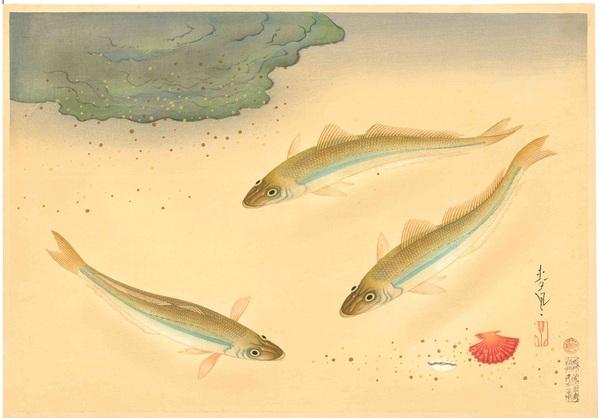 大野麦風 大日本魚類画集 キス