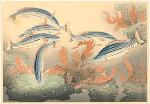 大野麦風 大日本魚類画集 シマイサキ