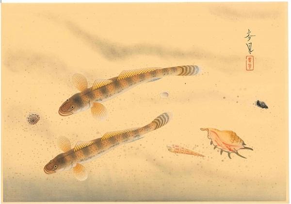大野麦風 大日本魚類画集 マハゼ