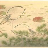 大野麦風 大日本魚類画集 テナガエビ