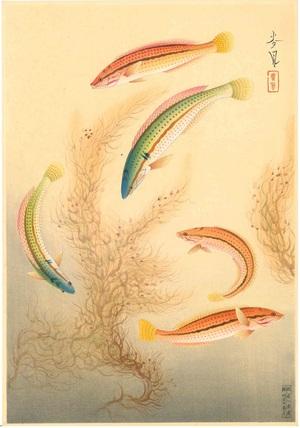 大野麦風 大日本魚類画集 ベラ
